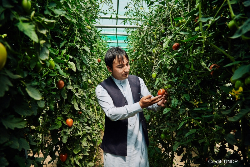 UNDP Climate Change Panshiri farmer Kazem struggled to grow enough before UNDP provided him with a greenhouse that has boosted his production.